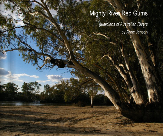 Mighty River Red Gums